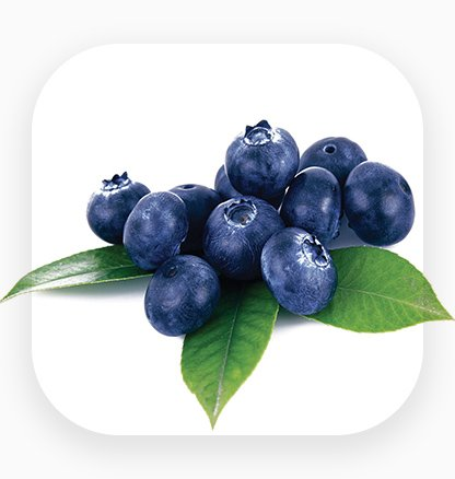 An icon for blueberry export